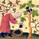 Zámecké podzimní slavnosti, Smiřice (CZ)